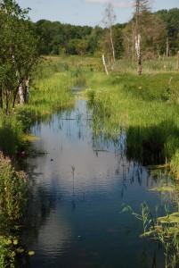 naturpleje & vandløbspleje
